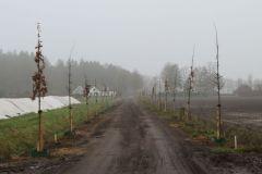 Prins Hendriklaan met bomen